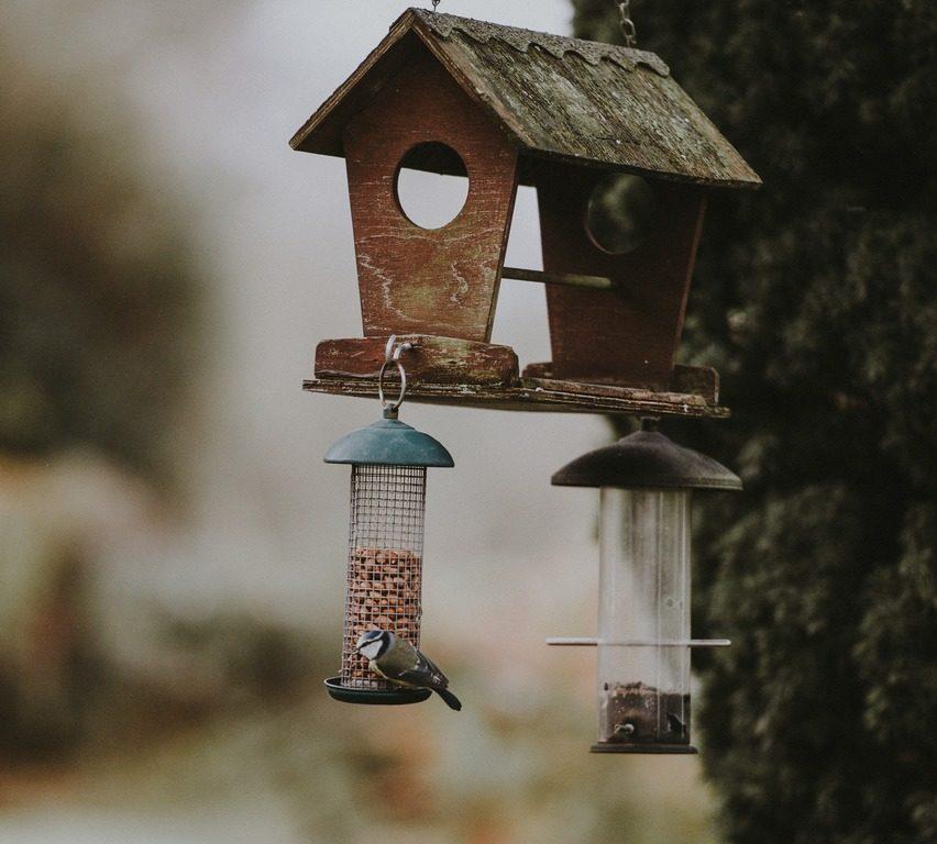Photo of Bird Box, una historia sobre fuerzas internas en confrontación con el miedo y la inseguridad: una reflexión sobre el suicidio.